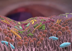 Darmflora, Darmbakterien